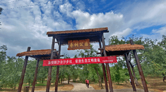 大荔沙苑古枣林保护活动