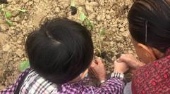 教导儿童农耕知识