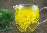 金丝皇菊与普通菊花有什么区别?不一样吗?