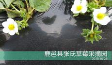 鹿邑县张氏草莓采摘园