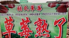 张氏草莓-欢迎您来采摘!