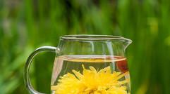 到采摘园必尝金丝皇菊茶