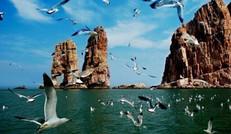 大美海岛,鸟的天堂!