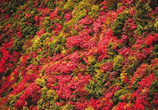 巫山红叶红得早 水陆并进游三峡