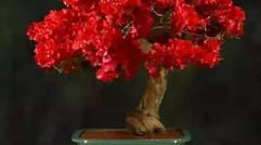 想赏花赏树可以报名啦