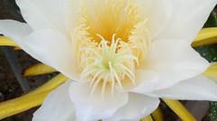 鲜 花 盛 开