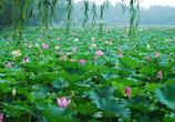 国家振兴乡村计划给农家乐带来新机遇