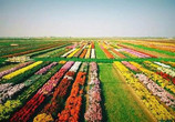 丰南优化农业产业结构力促乡村振兴