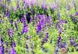 黃芩的功效與作用是什么?黃芩的主治病癥有哪些?