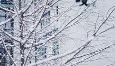 雪 后 風 景
