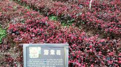周邊的美麗景色海棠花