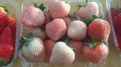 嬌俏玲瓏的草莓