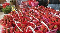 海川土貨草莓配送