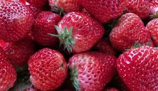 又大又甜的草莓