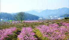 官庄村风光景点