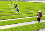 走有中国特色的现代农业发展道路