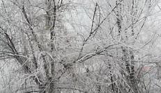 冬天的风景,风雪一片,